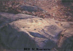 BEE roncaccio rupestre