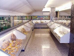 torino-museo scienze naturali don bosco